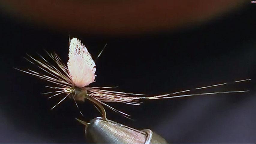Mayfly dry fly