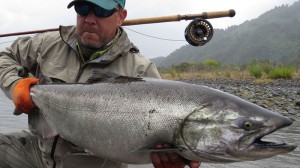 Chrome chinook salmon king