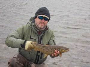 Brown wild trout